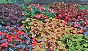 colorful plants